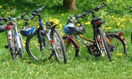 Familieudflugt med fokus på natur og bevægelse